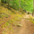 Stock Photo: Hiking trail 01