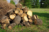 Holzstapel - stack of wood 28 — Stock Photo