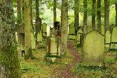 Juedischer friedhof - cmentarz żydowski 07 — Zdjęcie stockowe