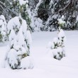 Stock Photo: Wald im Winter - forest in winter 50
