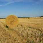 Strohballen - bale of straw 24 — Stock Photo