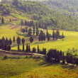 Stock Photo: Zypressenkurven - cypress curve