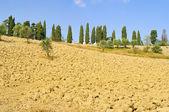 Toskana Feld - Tuscany field 01 — Stock Photo