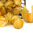 Stock Photo: Physalis 06