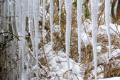 Eiszapfen - icicle 06 — Stock Photo