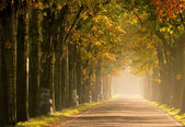 Allee im Herbst - avenue in fall 17 — Stockfoto