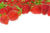 Erdbeere freigestellt - strawberry isolated 13 — Stock Photo