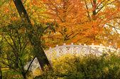 Woerlitzer парк вайсе bruecke - английский сад woerlitz белого моста 1 — Стоковое фото