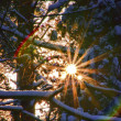 Wald im Winter - forest in winter 64 — Stock Photo