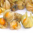 Physalis fruits. — Stock Photo #14437315