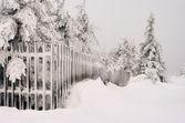 Zaun im Winter - fence in winter 03 — Stock Photo