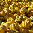 Stock Photo: Zierkerbis - ornamental pumkin 13