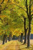 Lindenallee - lime tree avenue 09 — Stock Photo