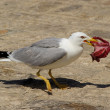 Mewe mit Fisch - gull with fish 02 — Stock Photo