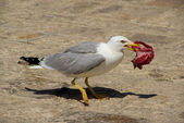 Mewe mit Fisch - gull with fish 02 — Stock Photo