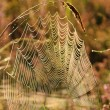 Stock Photo: Spinnennetz - cobweb 10