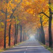 Avenue in fall 26 — Stock Photo