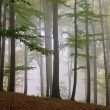 Buchenwald im Nebel - beech forest in fog 11 — Stock Photo