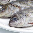 Stock Photo: Dorade - Gilt head bream 13