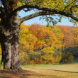 Eiche im Herbst - Oak tree in fall 02 - Stock Photo