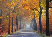 Allee im Herbst - avenue in fall 25 — Stock Photo