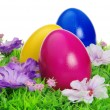 Ostereier auf Blumenwiese - easter eggs on flower meadow 15 — Stock Photo #15332971