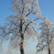 Rauhreif Baum - hoarfrost tree 01 — Stock Photo #15335215