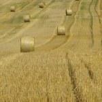 Strohballen - bale of straw 20 — Stock Photo