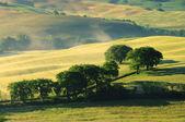 Toskana Huegel - Tuscany hills 17 — Stock Photo