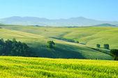 Toskana Huegel - Tuscany hills 43 — Stock Photo