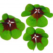 Stock Photo: Four leafed clover