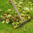 Leaves rake — Stock Photo #17379135