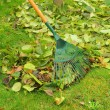Leaves rake - Stock Photo