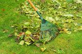 Leaves rake — Stock Photo