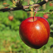 Apple on tree — Stock Photo #18562123