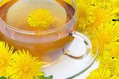 Tea dandelion — Stock Photo