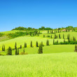 Stock Photo: Cypress curve 36
