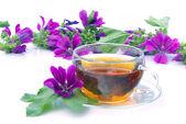 Tea malva 08 — Stock Photo