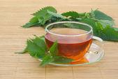 Tea nettle — Stock Photo
