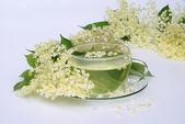 O mais velho de chá de flores — Fotografia Stock