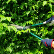 Stock Photo: Cut hedge 10