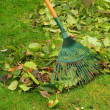 Stock Photo: Leaves rake 09