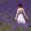 Lavender field and young woman 03 — Stock Photo