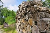 Stack of wood from cork oak 06 — Stock Photo