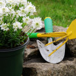 Stock Photo: Shrub planting 05
