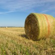 Bale of straw 26 — Stock Photo