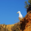 Gull 18 — Stock Photo #22035383