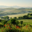 Tuscany hills 19 — Stock Photo
