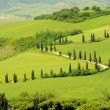 Stock Photo: Cypress curve 07