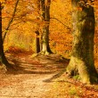 Stock Photo: Beech forest with trail